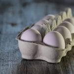 Belajar Kebijaksanaan Dari Telur