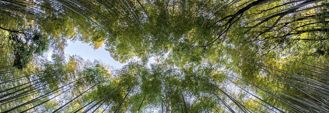 Hutan Bambu - 28