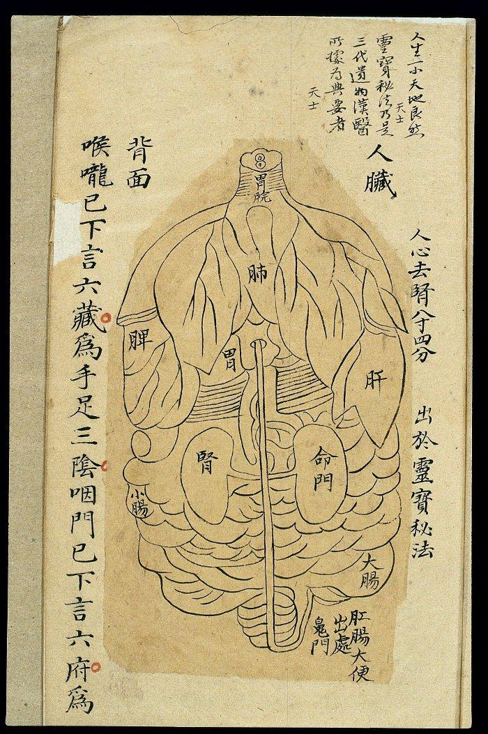 Yuanmen Maijue Neizhao Tu (元門脈訣內照圖), bagan organ internal tubuh. Dikaitkan dengan Hua Tou. Jejak dari Dinasti Qing.