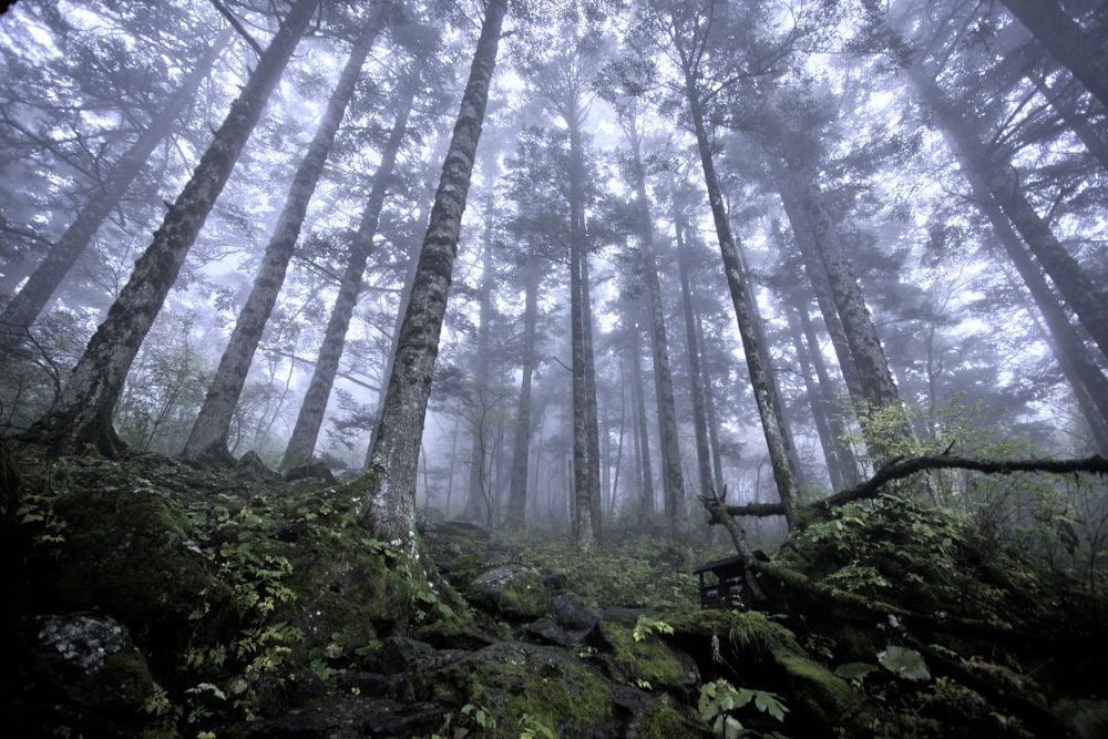 Hutan di Shennongjia